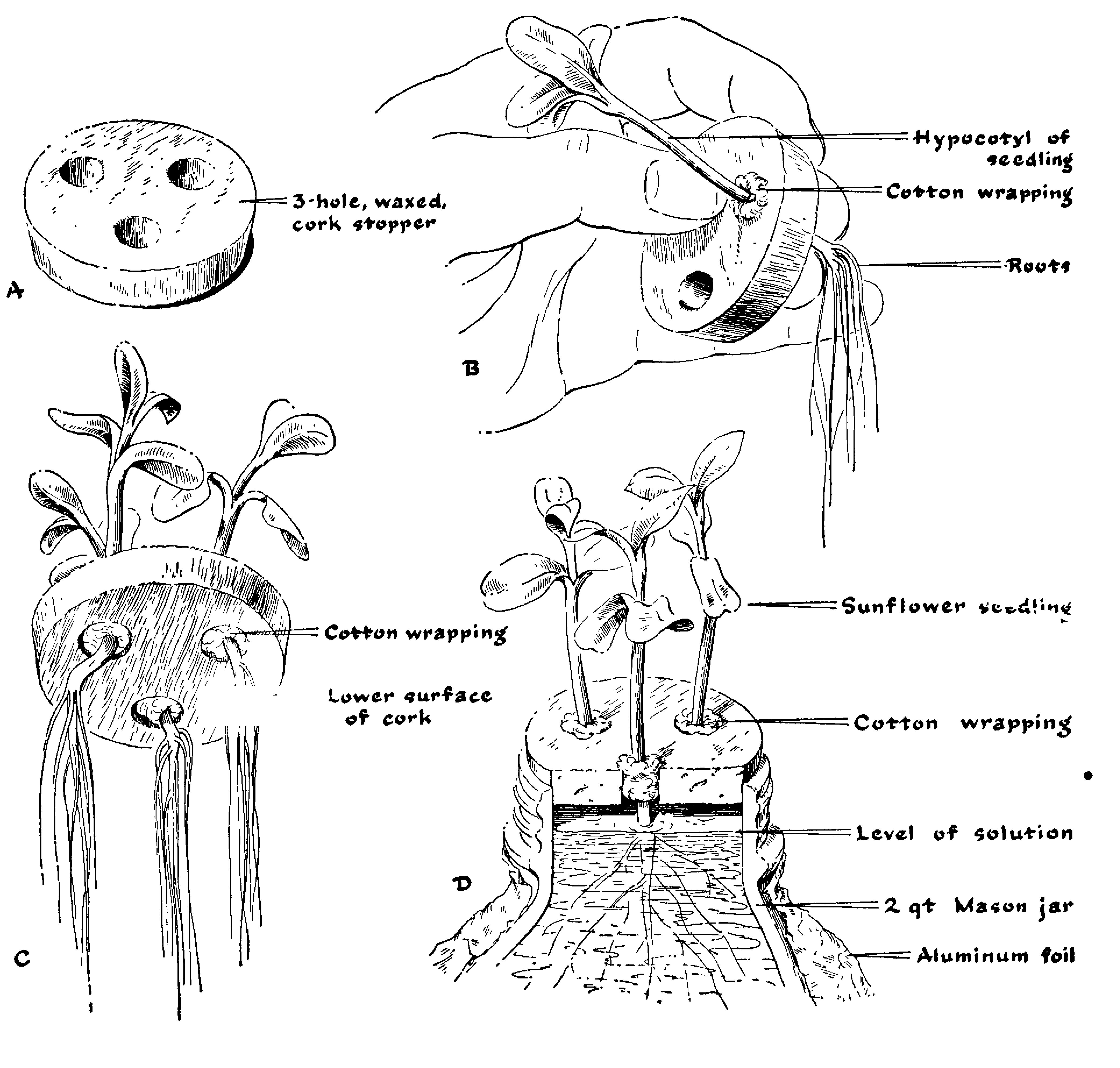 Fertilidad de las plantas