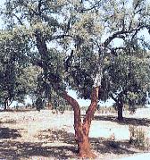 Parque Natural de la Sierra de Hornachuelos en Córdoba (España)