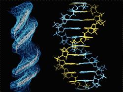 'Extracción de {ADN} humano'