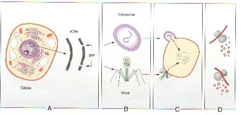 Clonación e Ingeniería genética