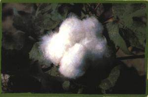 'Fibres Tèxtils # Fibras textiles'