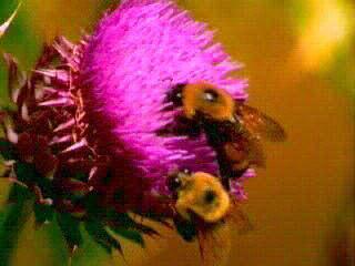 Esquema Del Proceso De Polinizacion En Plantas Con Flores Rojas