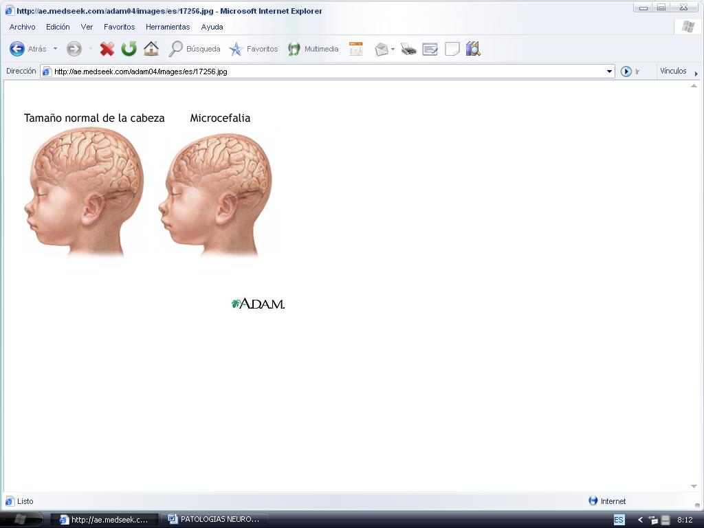 'Sistema neurológico'