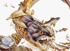 'Era Paleozoica'