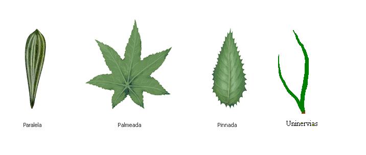 'Plantas'