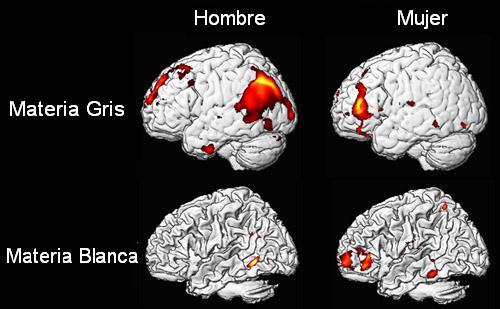 'Diferencias entre el hombre y la mujer'