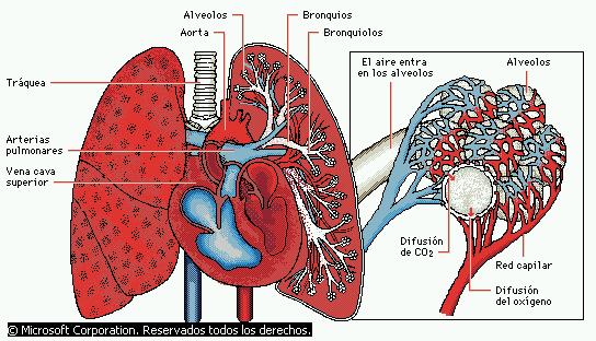 Nutrición: heterótrofa y autótrofa