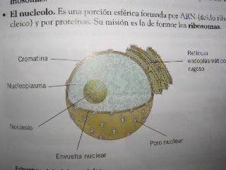 'Biología'