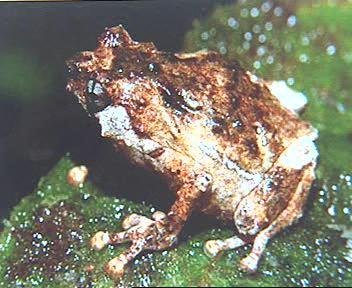 'Descubrimientos especies animales en Papúa'