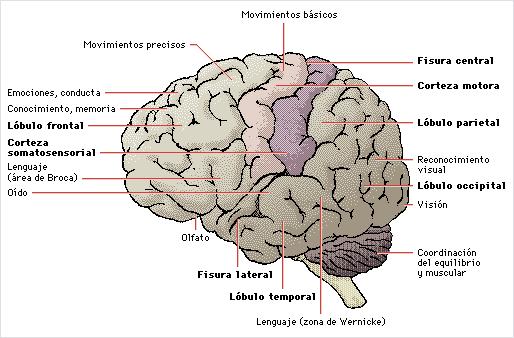 'Fisiología de la conducta'