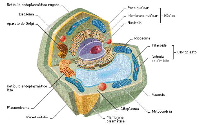 Encuentra Aquí Información De Morfología Celular Para Tu
