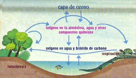 'El ecosistema'