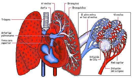 Enfermedades respiratorias en el deporte