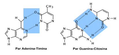'{ADN}, Hibridación y reacción en cadena de las Polimerasas'