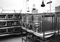 'Experimentación animal'