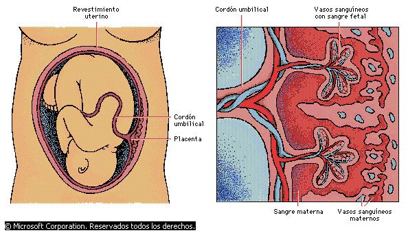 'Sistema urinario y repoductor masculino y femenino'