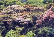 'Regiones Forestales de Venezuela'