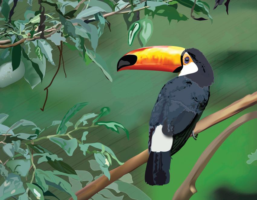'Estado Amazonas'