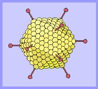 Virus biológico