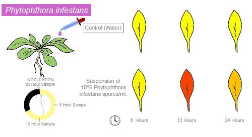 'Informe sobre el Gen AT5G54160 de Arabidopsis Thaliana'