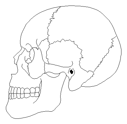 'Anatomía humana'