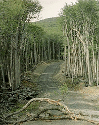 Riesgos antrópicos de los recursos naturales en Chile