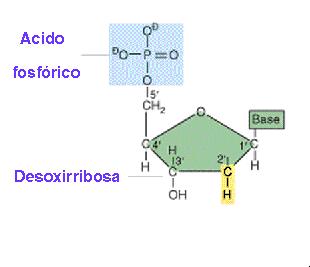 'Nucleótidos'