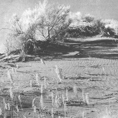 'Tipos y efectos de la erosión'
