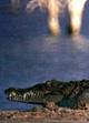 'Lago Enriquillo'