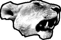 Etología del león