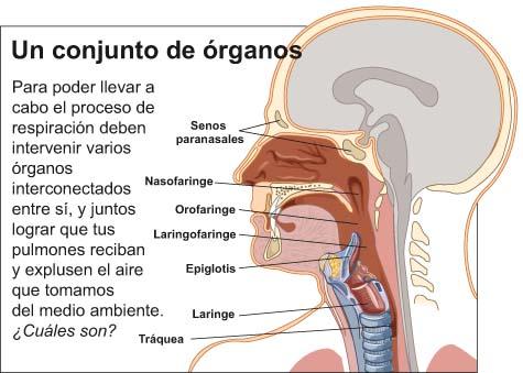 'Aparato respiratorio'