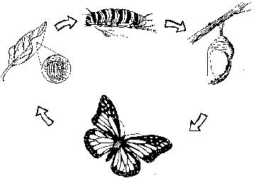 Encuentra Aquí Información De La Mariposa Monarca Para Tu Escuela