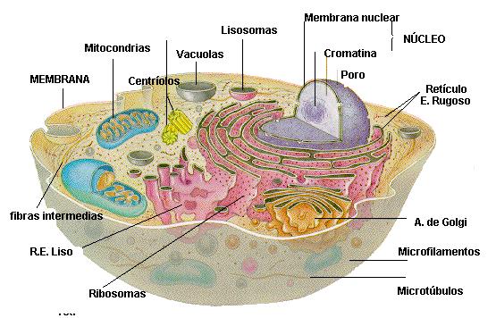 'Biología y anatomía humana'