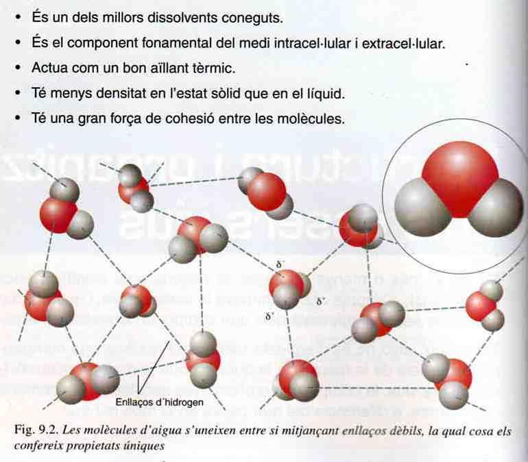 'Biomolècules'