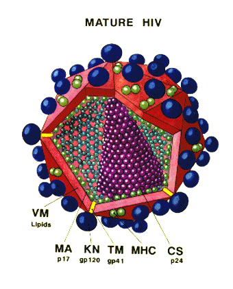 'Inmunidade i {SIDA}'