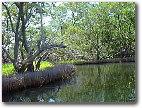 'Parque Nacional Laguna de la restinga'