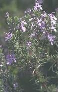 Flora en el Parque Nacional de Doñana