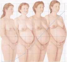 Cambios fisiológicos durante el embarazo en el sistema circulatorio