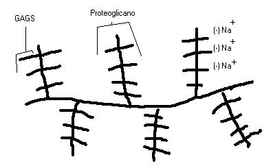 'Histología'