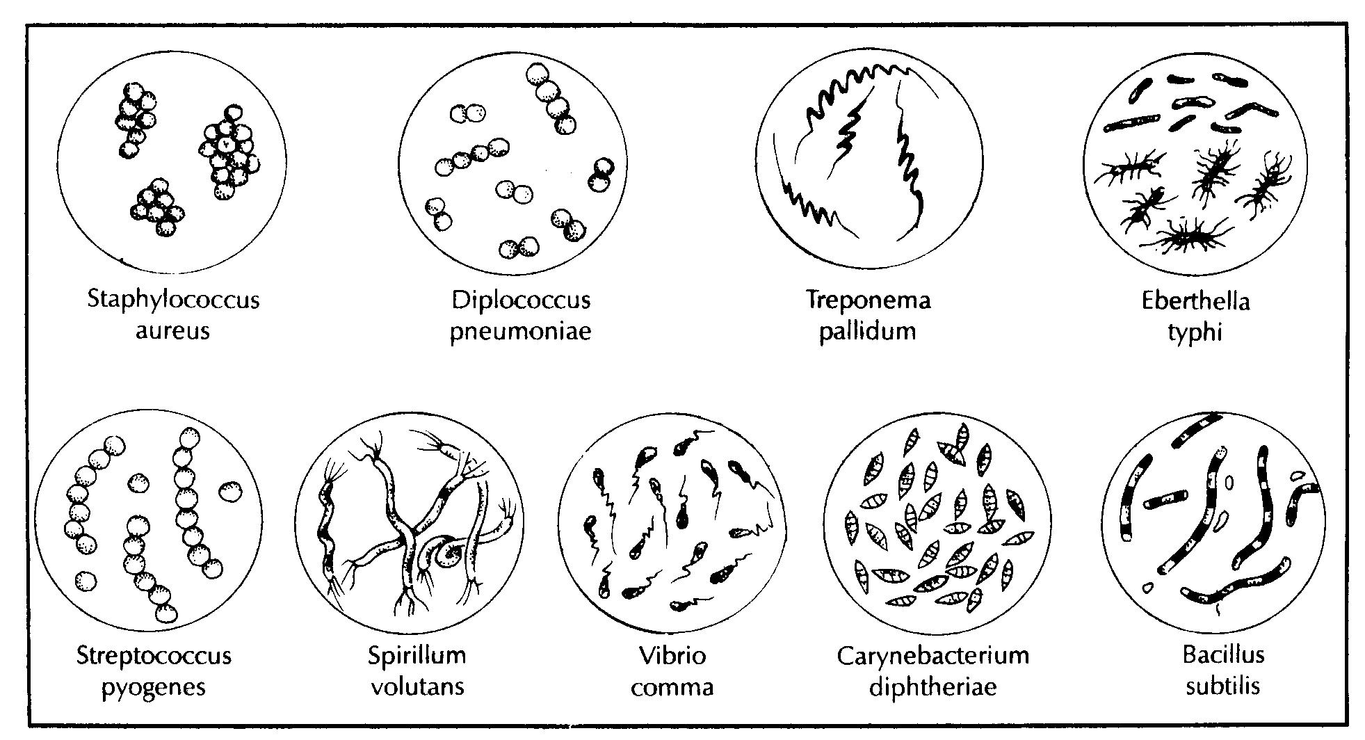 Reinos biológicos