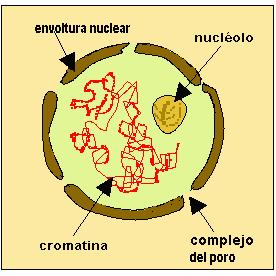 Células: procariotas y eucariotas