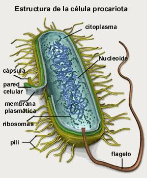 Encuentra Aquí Información De Biología Celular Y Molecular