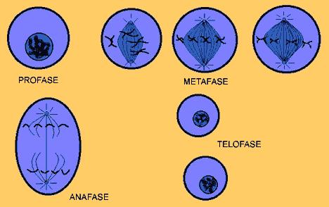 'Biología celular y molecular'