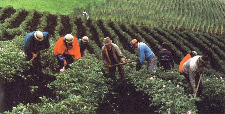 Ecuador. Agricultura