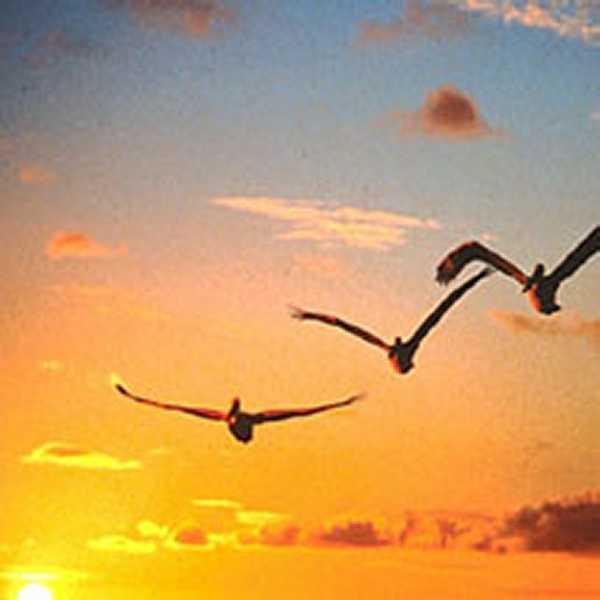 Resultado de imagen para gaviotas volando alto