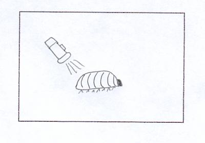 Estímulos en invertebrados