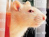 'Disección de un ratón'