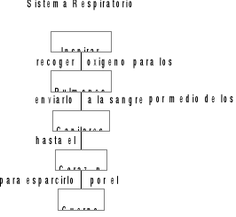 Sistema circulatorio y respiración