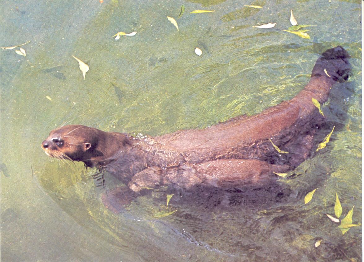 Mamíferos acuáticos