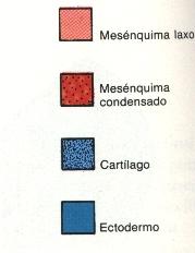'Meromelia'